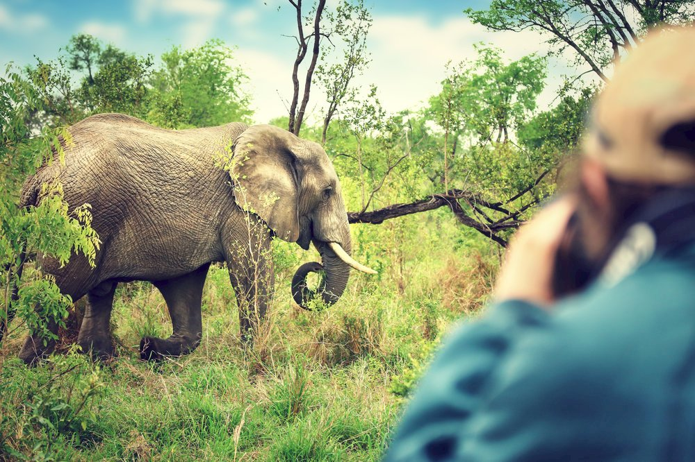 Photographer taking pictures of an African elephants